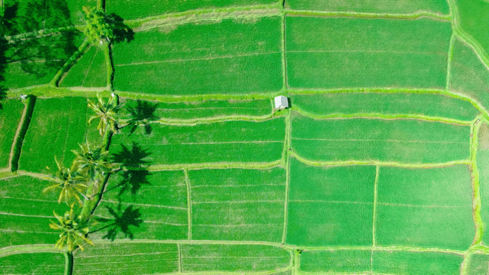 Wie sich Nahrungsmittelknappheit trotz Klimawandel bekämpfen lässt