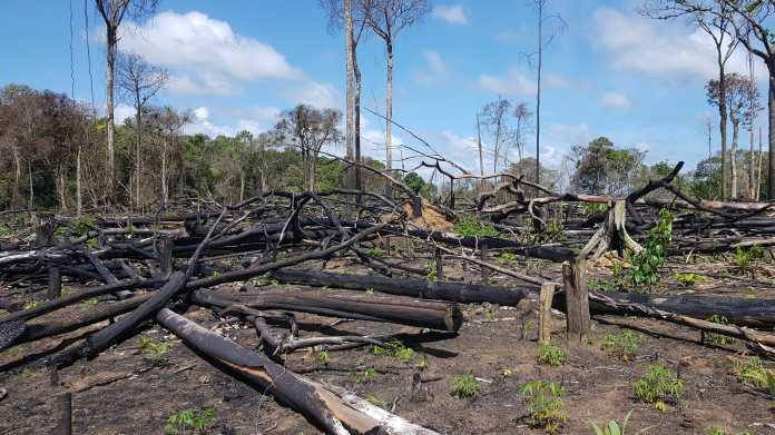Brasilien: Satellitendaten zur Regenwaldabholzung – Chefforscher verliert Job