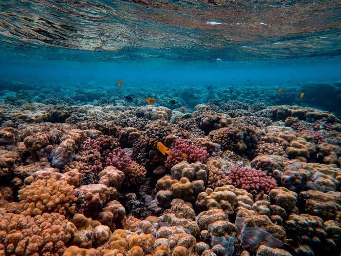 Mit Schall Korallenriffe heilen