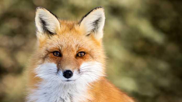 Firefox: Neue Version 73 liefert wichtige Security-Patches mit