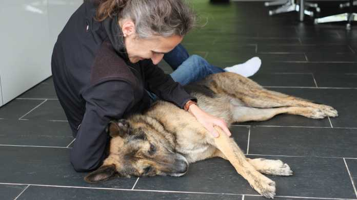 Hund und Katze: Glücklich zu Hause