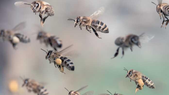 Insekten im Flug fotografieren