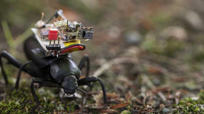 Käfer als Kameramann