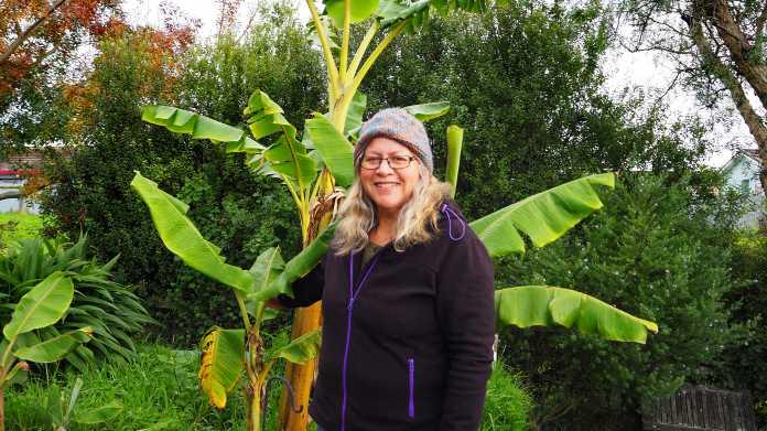 Bananen für Kiwis