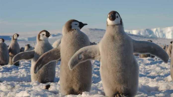 Linux 5.8: Bislang größtes Update des Kernels erschienen