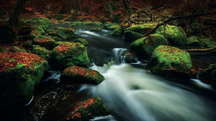 Herbstfotografie: Starke Fotos bei besonderen Licht- und Wetterstimmungen