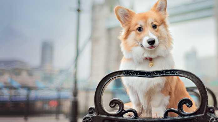 Hundefotografie: Tierische Charakterköpfe sicher porträtieren