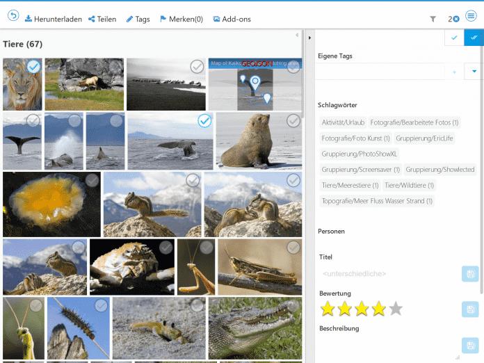 Künstliche Intelligenz sucht in PicApport 9.0 automatisch nach passenden Stichwörtern.