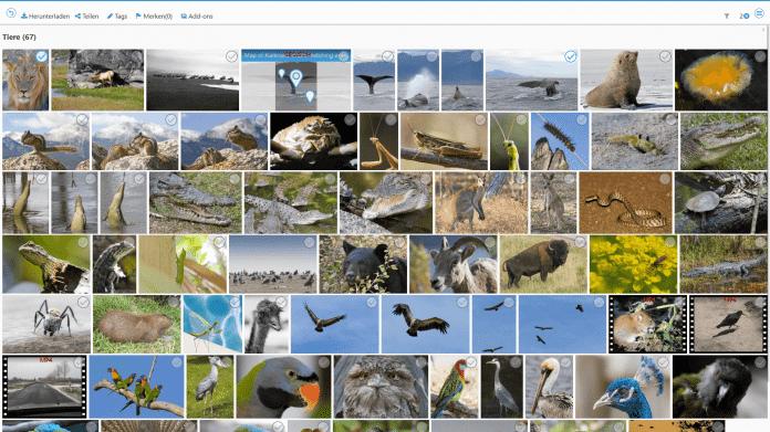 Smartes Fototagging für PicApport 9