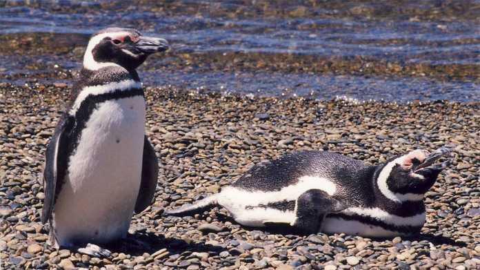 Linux 5.9: Neue Kernel-Version schließt Lizenz- und Sicherheitslücken