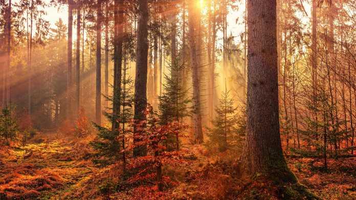 Artenwanderung: Weltweiter Anstieg gebietsfremder Spezies