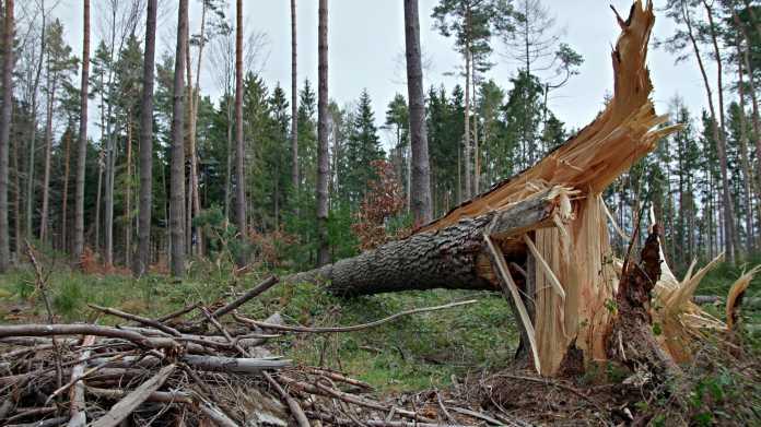 Sturm, Wald, Orkan, Sturmschaden, Bäume