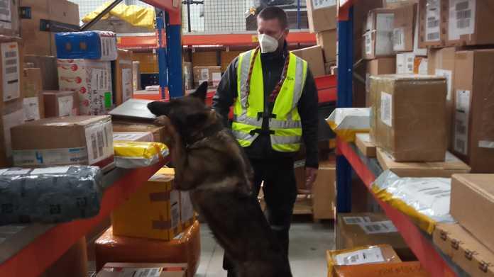 Schäferhund zwischen Versandpaketen, dahinter ein uniformierter Mann mit Maske