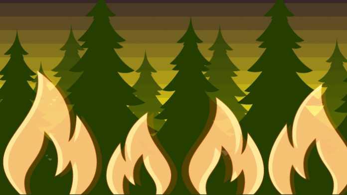 Statistik der Woche: Wie Brände immer mehr Wald zerstören