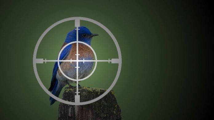Twitter warnt vor staatlichen Angriffen auf seine Nutzer