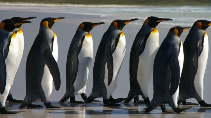 Linux from Scratch 8.0: Neues Major Release der LFS-Anleitungen