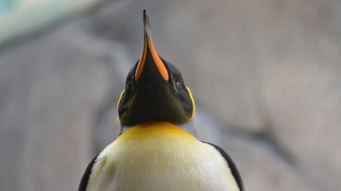 systemd fürs Administratoren-Linux: Grml 2017.05 freigegeben