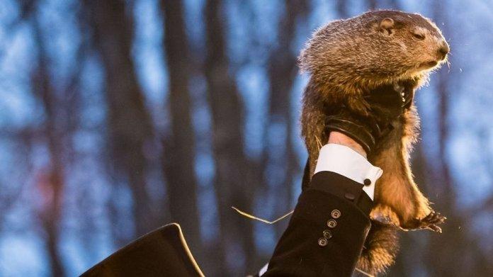 PETA fordert: Und täglich soll nur noch die Murmeltier-KI grüßen