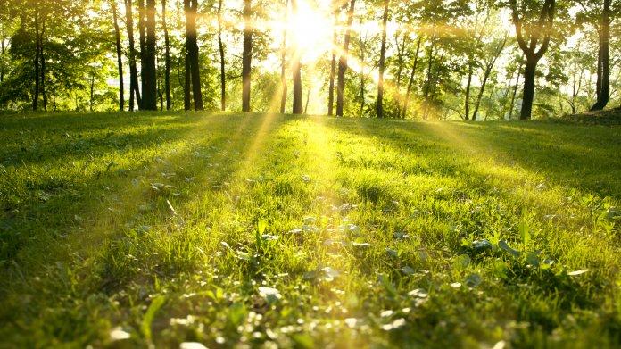 Frühling, Sonne, Wald