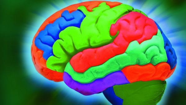 IBM und Numenta wollen das Gehirn simulieren