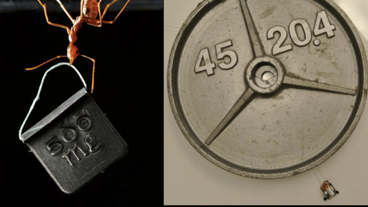 Miniroboter zieht das 2000-Fache seines Eigengewichts