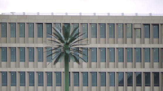 Baum vor Gebäude