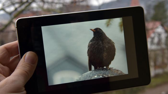 Bilderkennung: Algorithmen aus Jena sollen Tiere auch in Bewegung bestimmen können