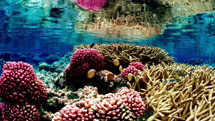 Neues Kamera-System soll Korallenschäden genauer aufzeigen