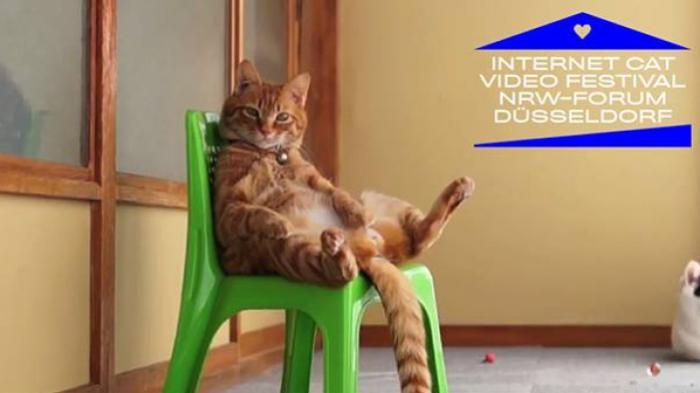 Golden Kitty Award: Eine Würdigung kätzischer Verdienste um das Internet