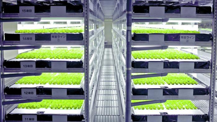 Salat aus Roboterhand