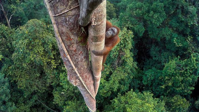 Wildlife Photographer of the Year 2016: Die Gewinnerbilder