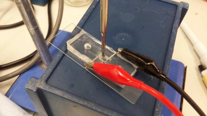 Eine Leuchte aus Bakterien