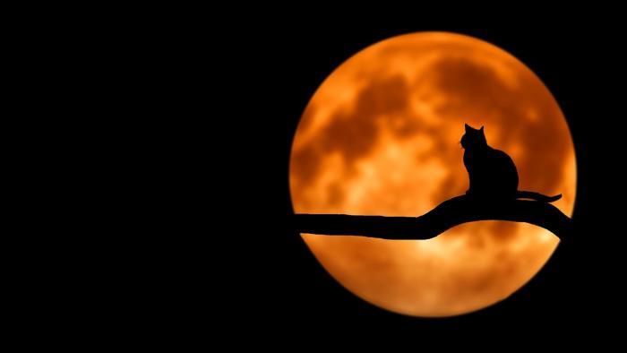 Katze, Mond, Gelassenheit, Nacht