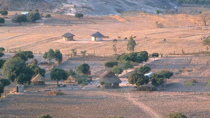 Hybridpflanzen sollen Brotkorb Afrikas retten