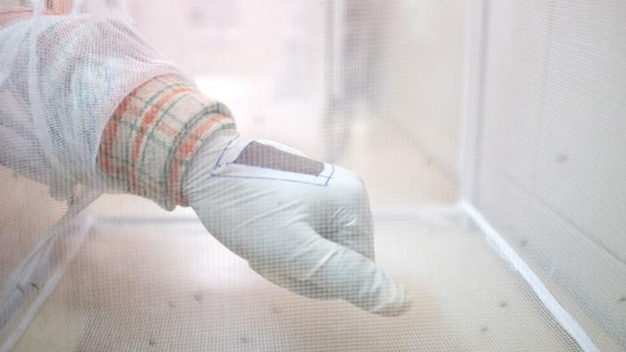 Mit radikaler Gentechnik gegen Malaria