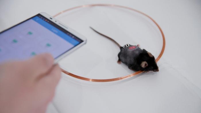 Chinesische Forscher regulieren Insulin-Produktion von Zellen per Smartphone
