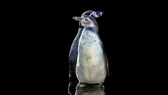 Vollständig quelloffen: Linux mit einem OpenPOWER-Server einsetzen