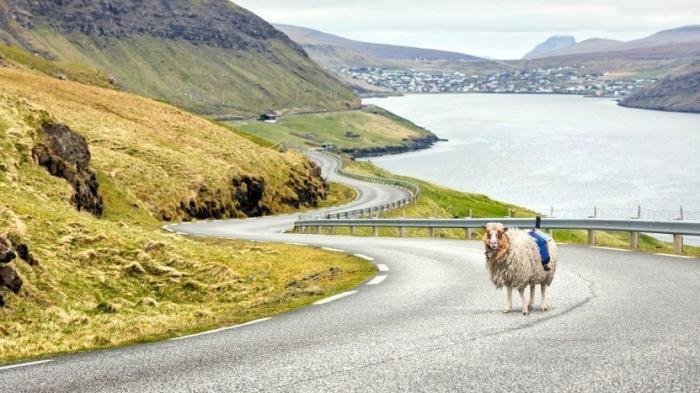 Färöer-Inseln: SheepView statt Google StreetView