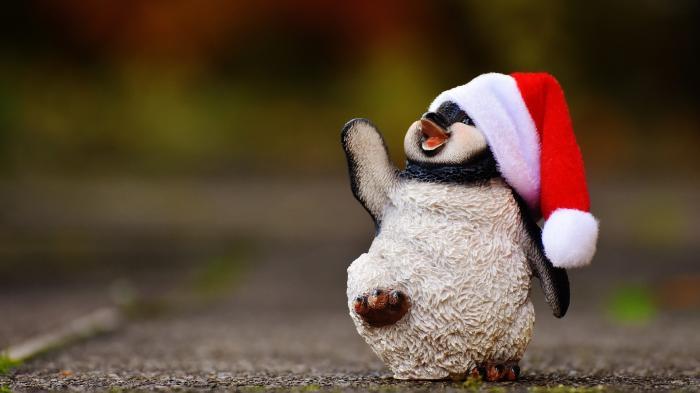 Junger Pnguin mit Weihnachtsmannmütze