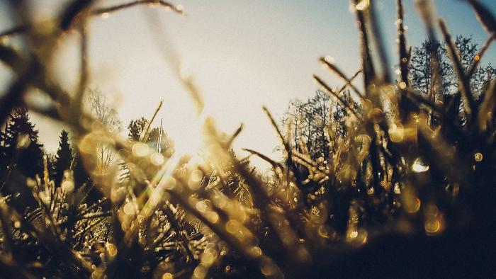 Kurz-Tipp Smartphone-Fotografie: Frühlingsfotos mit ohne Bokeh