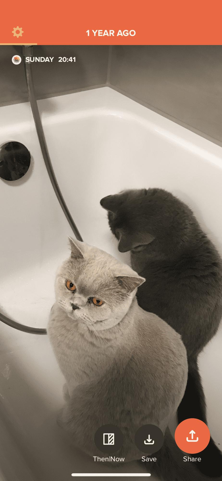 Facebook weiß, dass der Redakteur im letzten Winter seine Katzen in die Badewanne gelassen hat. Time Hop erinnert ihn spielerisch daran.
